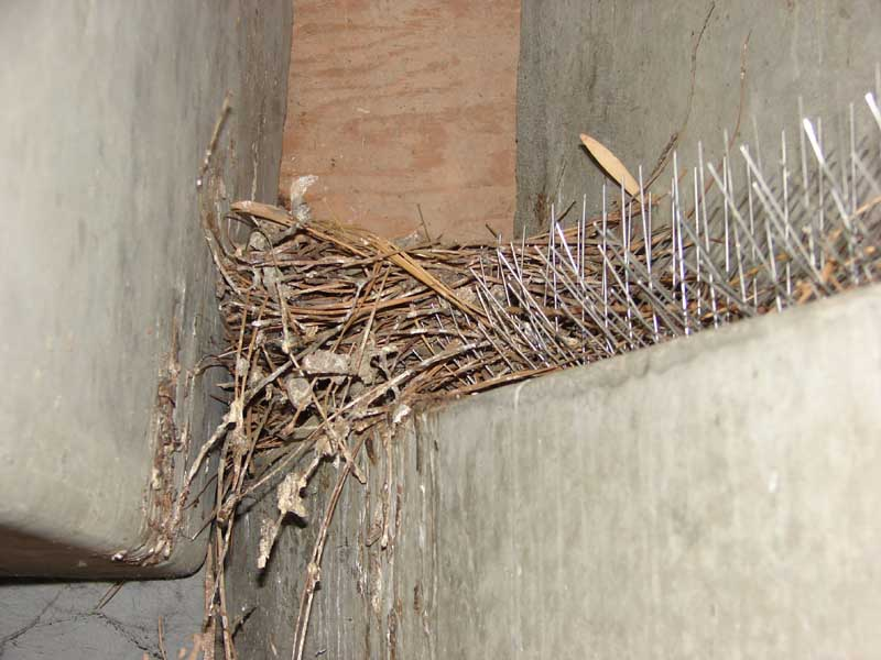 Abolish Pest Control Pigeon Gallery